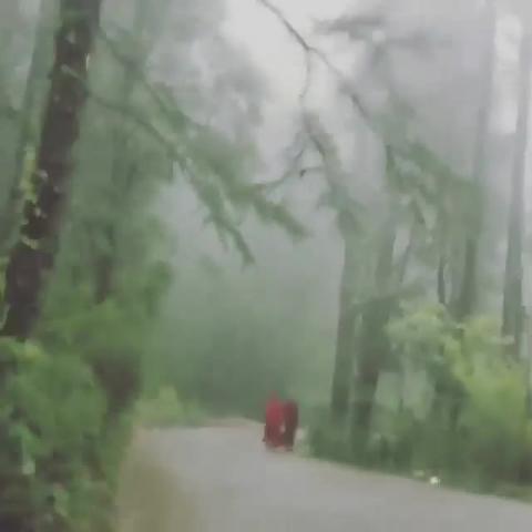 Rainy Rain - Dharamshala