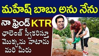 Mahesh babu accepted KTRs Haritha Haram Green challenge | Sitara Ghattamaneni | Top Telugu TV