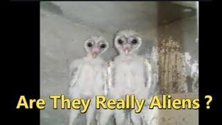 Birds Like Aliens Found In Vizaq Andhra Pradesh | Are They Really Aliens ? | @ SACH NEWS |