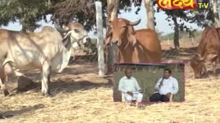Gausavardhan  -1 Save Cow Save Country