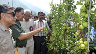 Governorinauguratesfirstharvestofhigh density applesatSKUASTK