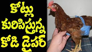 Hen Dyper Successfull Business Trick I RECTV INDIA