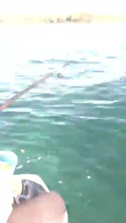 Squid Spits Up Ink Into A Fisherman's Face While On The Ocean