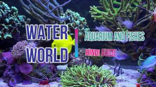 Water World (Intro)