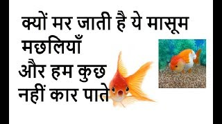 Fish Death, WHY|क्यूँ मर जाती है मछलियाँ | Why fish dies in aquarium | Fish death reasons