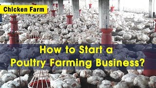 How to Start a Low Cost Poultry Farming (Chicken Farm) Business? | Capacity 25 - 30K