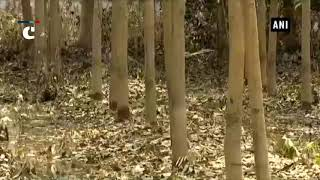 Kerala floods affect rubber plantation in the state