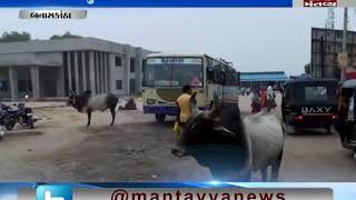 people are stresed because of stray cattle in Banaskantha