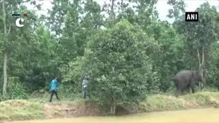 Jumbos creates havoc in Odisha's Mayurbhanj