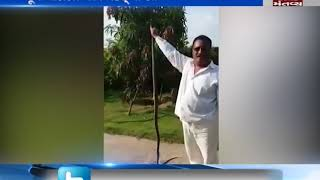 bjp Former MLA caught snake in Una