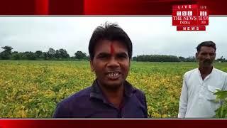 सिवनी मालवा के खेतों में हुई सोयाबीन की फसलें बर्बाद मोदी जी का सपना हुआ साकार -THE NEWS INDIA