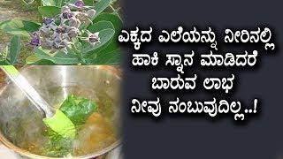 ಎಕ್ಕದ ಗಿಡದಲ್ಲಿರುವ ಅತಿ ದೊಡ್ಡ ರಹಸ್ಯ  | Kannada Health Tips | #topkannadatv