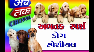 ABTAK CHANNEL - DOG SPECIAL STORY  | PART - 1