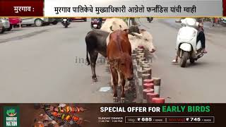 Stray cattle is nightmare for motorists in Mormugao