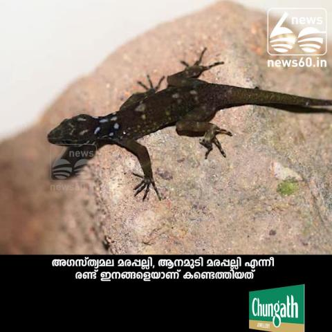 New species of lizards identify kerala western ghats