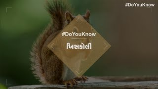 Do You Know : About Flying Squirrel and Similar Squirrel