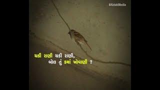 Sparrow Sparrow Where are You?