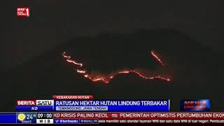 Lereng Gunung Sumbing Terbakar, Ratusan Hektare Hutan Lindung Hangus