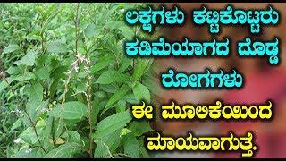 ಲಕ್ಷಗಳು ಕಟ್ಟಿಕೊಟ್ಟರು ಕಡಿಮೆಯಾಗದ ದೊಡ್ಡ ರೋಗಗಳು ಈ ಮೂಲಿಕೆಯಿಂದ ಮಾಯವಾಗುತ್ತೆ | Precious herbs in world