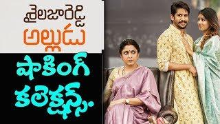 Shailaja Reddy Alludu box office collections I Naga Chaithanya I rectv India