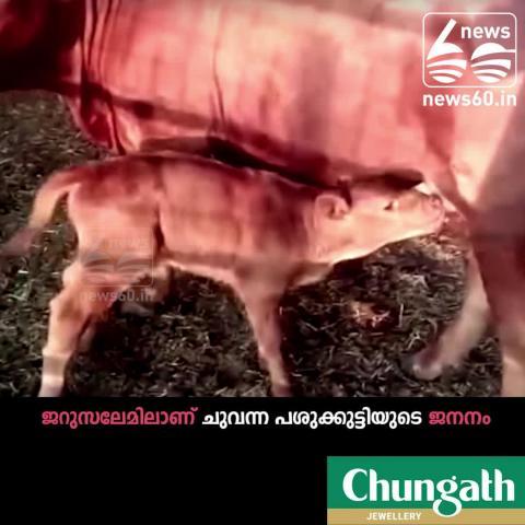 World  End : Birth of red heifer in Israel