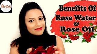 Benefits Of Rose Water & Rose Oil / රුව වඩන රෝස පෙති