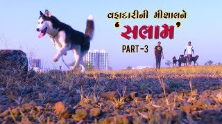 Dog :  Example of  Loyalty Special Coverage by Abtak Channel | Part-3