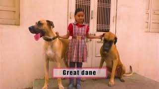 Dog :  Example of  Loyalty Special Coverage by Abtak Channel | Part-2