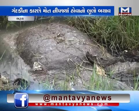 Bharuch: People in anger due to death of a Tortoise in polluted lake.