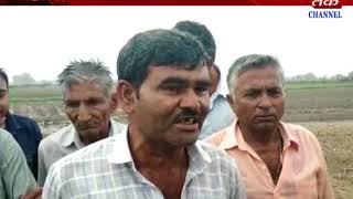 Keshod+manavadar : heavy rain damage farm farmer get tension because of rain
