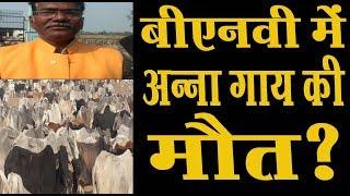 बीएनबी इण्टर काॅलेज के प्रबंधक डा0 उमाकांत ने गायों को लेकर किसानों से यह किया निवेदन