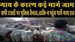 राठ-जलालपुर मार्ग पर गायों को गांव से राठ ला रहे ग्रामीणों के कारण मार्ग हुआ जाम