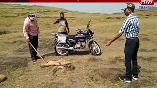 Kotdasangani : 8 feet python caught