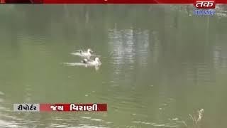 NaniGhansari : Arrival of prices birds