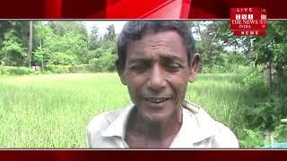 [ Assam ] असम में किसानों की आँखों मे आँसू, पात पोक के कारण नस्ट हुवा कई बीघा खेत की भूमि
