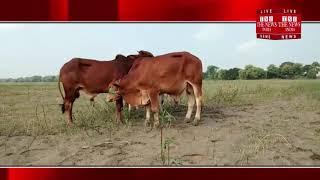 [ Ballia ] बलिया में पुलिस ने एक पशु तस्कर को किया गिरफ्तार  / THE NEWS INDIA 2018