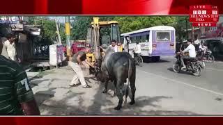 [Mathura ] मथुरा में नगर निगम एवं गायों के नाम पर मोटा चंदा करने वालों की खुली पोल. / THE NEWS INDIA