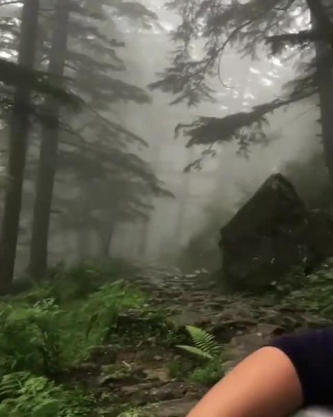 Triund Trek | Video by - Anshul
