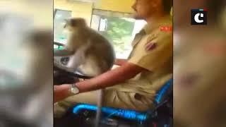Monkey takes control of KSRTC bus