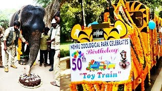 Elephant Cuts Cake In Nehru Zoological Park | 55th Zoo Anniversary | @ SACH NEWS |
