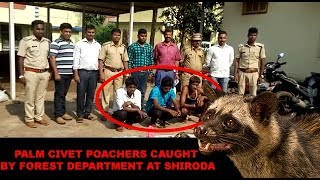 Palm Civet Poachers Caught By Forest Department At Shiroda