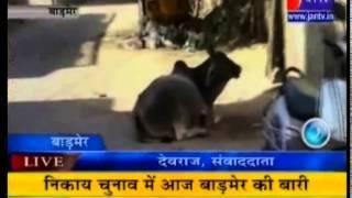 Nikay Chunav 2014 Rajasthan-Badmer(Part-1) on jan Tv