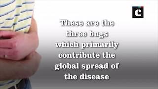 3-in-1 vaccine to deter traveller's diarrhoea: Study