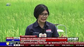 Rawa di Barito Kuala Diubah Jadi Lahan Pertanian Produktif