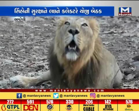 Amreli: Collector Aayush Oak organized a meeting for the safety of lions | Mantavya News