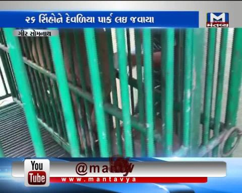 Gir Somnath: Vaccines have been given to the 26 Lions