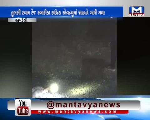 Amreli: Python Swallows A Whole Dog | Mantavya News
