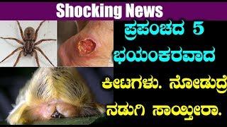 ಪ್ರಪಂಚದ 5 ಭಯಂಕರವಾದ ಕೀಟಗಳು  ನೋಡುದ್ರೆ ನಡುಗಿ ಸಾಯ್ತೀರಾ | Worlds most dangerous insects | Top Kannada Tv