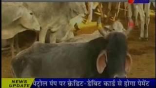 जयपुर मे हिंगोनिया में गायों की मौत का सिलसिला जारी Hingonia death of cows