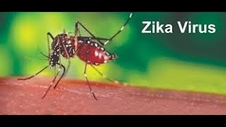 Zika Cases Rise To 123 In Rajasthan